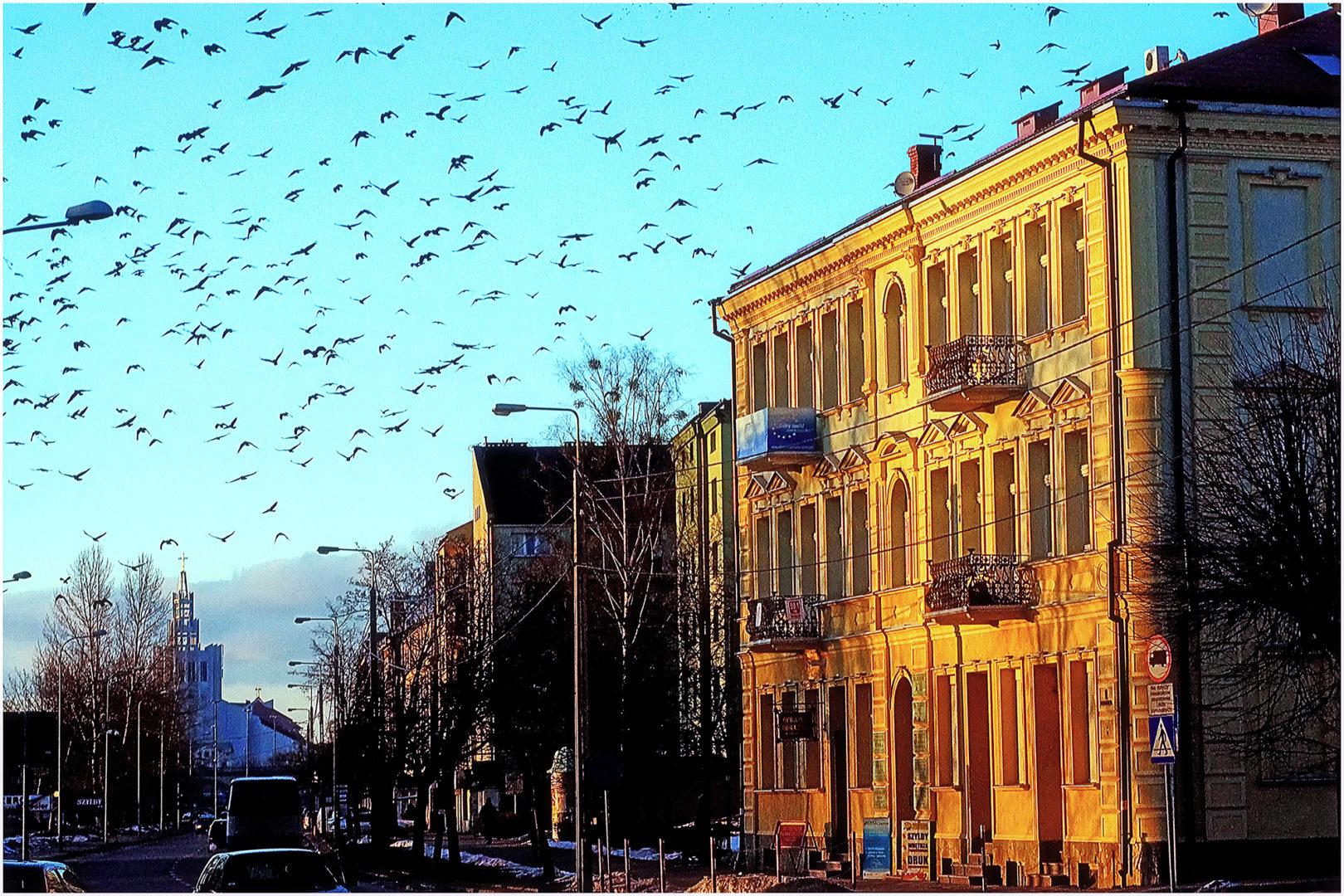 Fotografia – Czesław Zdanowicz