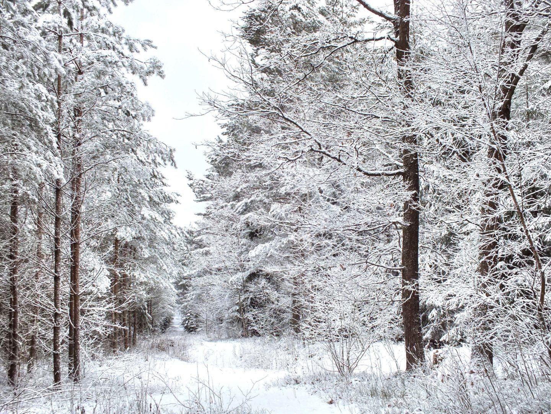 """""""Zima na Podlasiu"""" – fotografie Magdaleny Kruszewskiej"""
